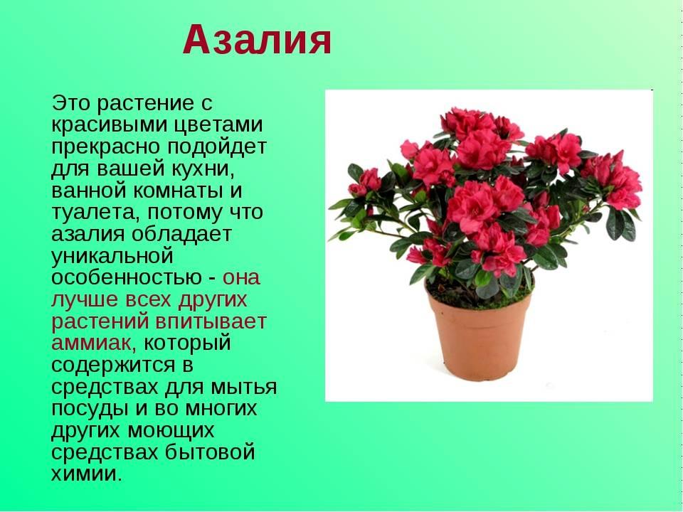 Приметы и суеверия, связанные с домашними цветами, и их толкование