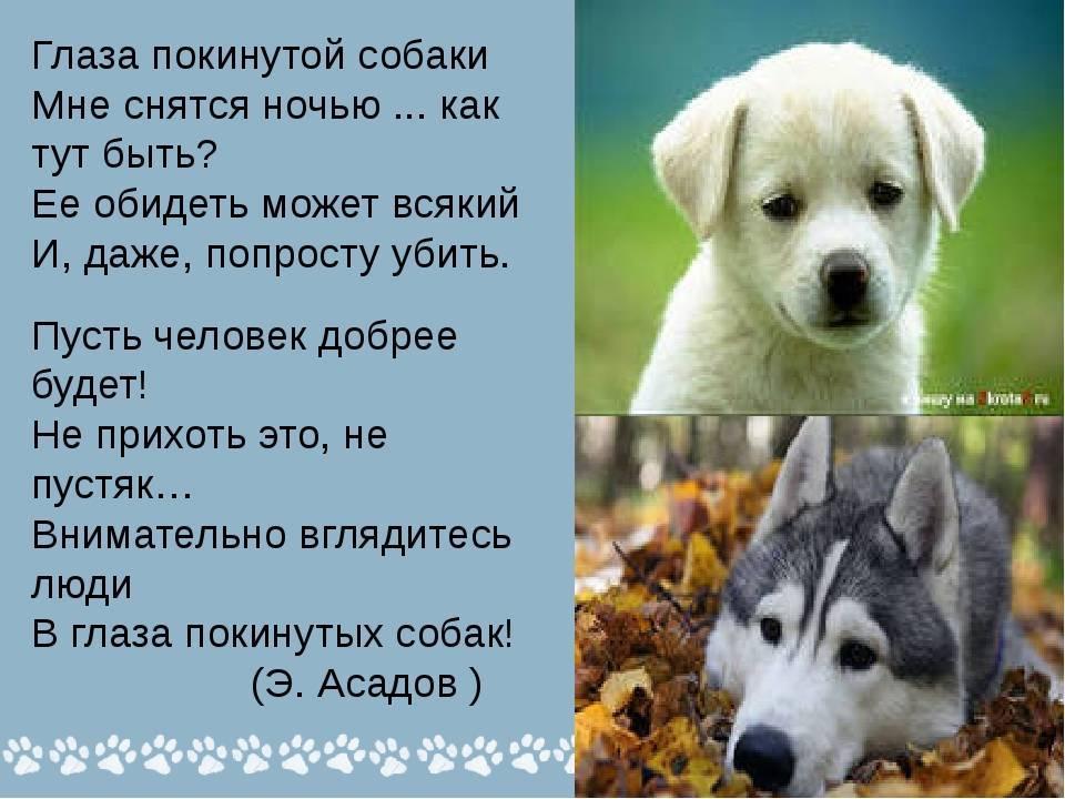 Собака в наших снах – толкование сновидений с собакой :: инфониак
