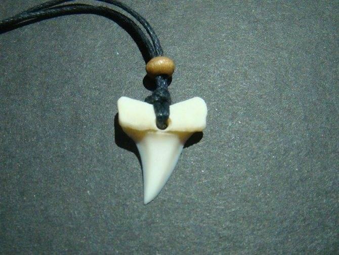 Зуб акулы — амулет, обладающий большой силой. описание, применение, советы по изготовлению