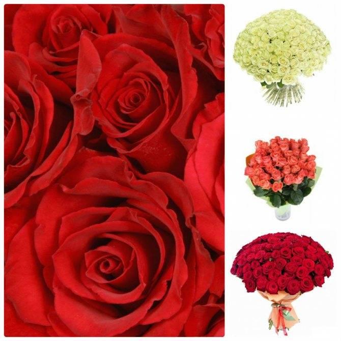 Какое количество роз можно дарить девушке на день рождения. цвета роз и их значение