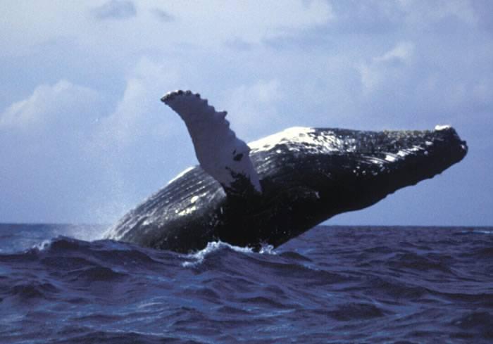 Кит в небе во сне. к чему снятся киты