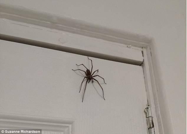 Что означает, если паук спустился с потолка перед лицом человека, подскажут народные приметы и суеверия
