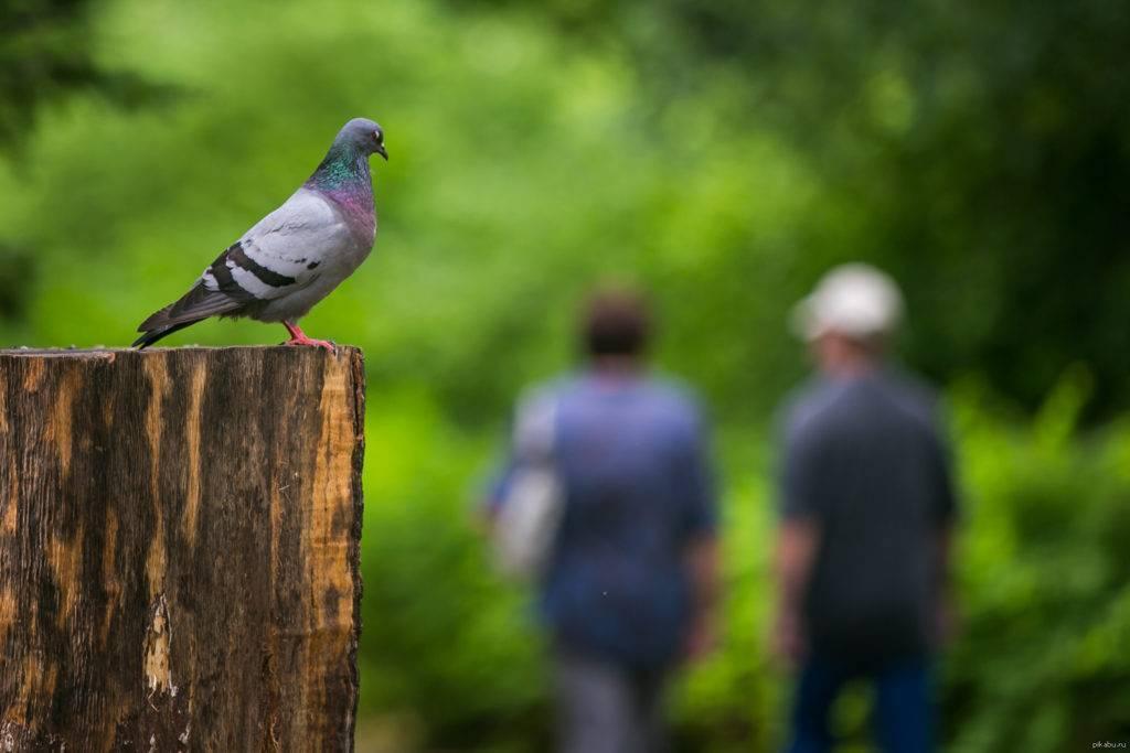 Примета: птица накакала на одежду, на голову – к чему гадит на человека