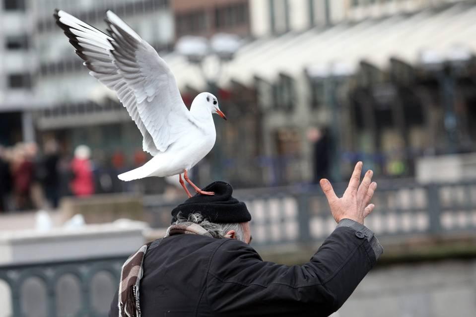 Птица накакала: значение приметы