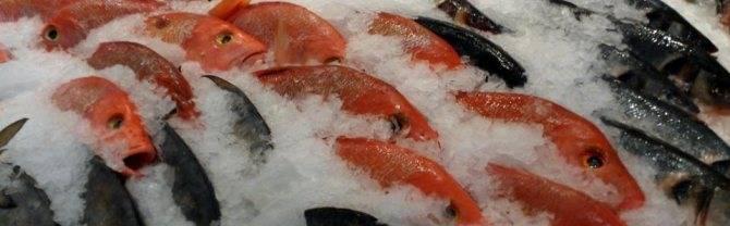 К чему снится замороженная рыба? толкование по 12 сонникам