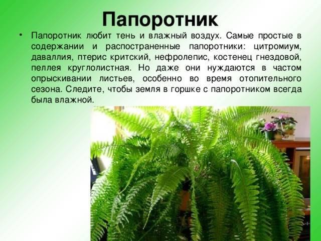 Все приметы о кактусах: к чему цветут, можно ли держать в доме