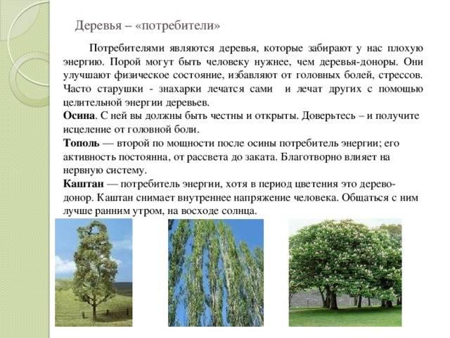 Растения вампиры и растения доноры в саду (энергия сада) | сайт о саде, даче и комнатных растениях.