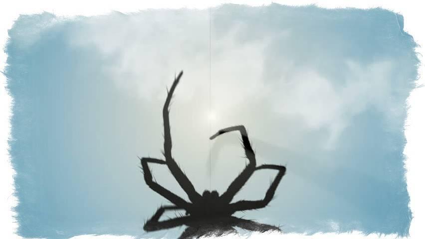 Приметы про пауков: разгадываем знаки судьбы - автор екатерина завьялова - журнал женское мнение