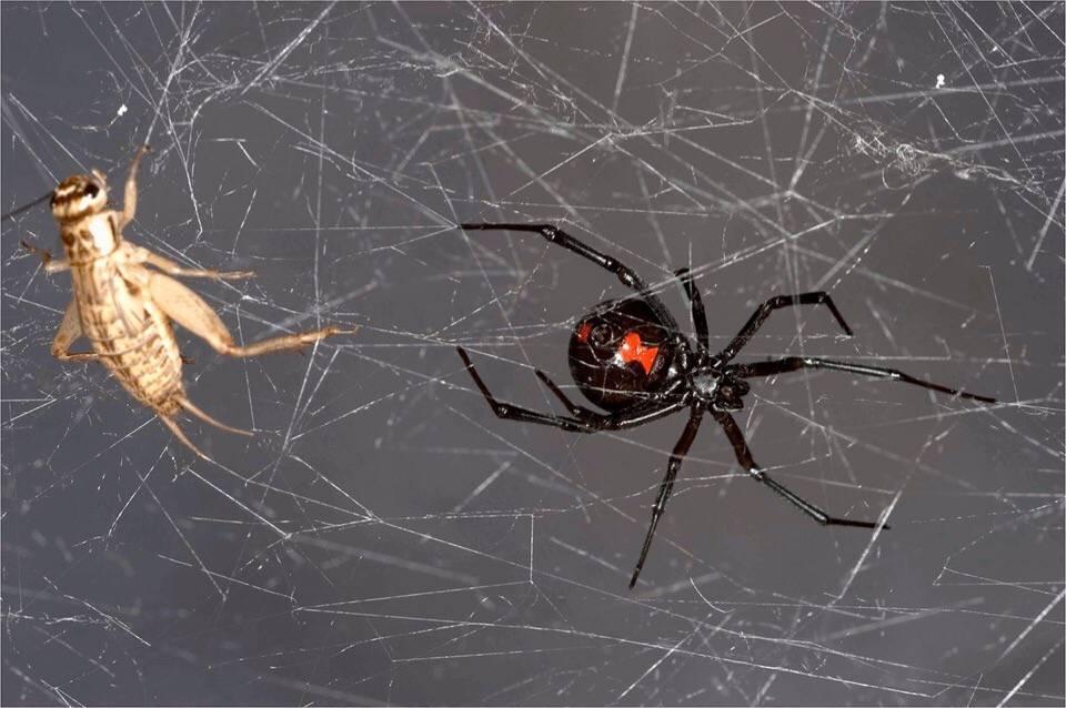 Приметы про пауков: к чему увидеть в доме вечером — хорошо это или плохо
