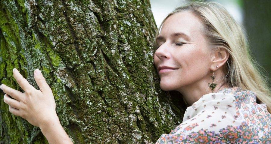 Деревья-доноры и деревья-вампиры – дачные дела