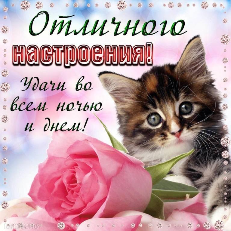 Хорошее пожелание доброго дня прикольные