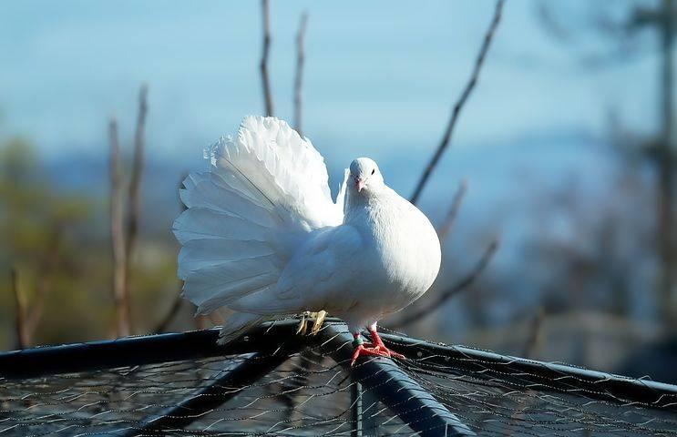 Сонник белый голубь с пятнами. к чему снится белый голубь с пятнами видеть во сне - сонник дома солнца