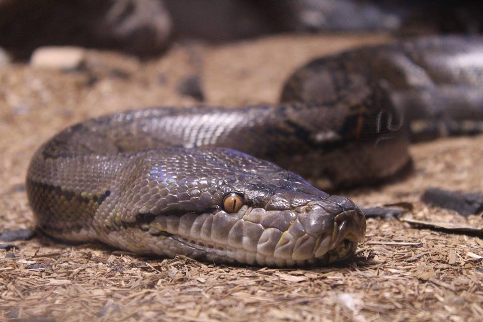 Сонник оказывать помощь после укуса змеи. к чему снится оказывать помощь после укуса змеи видеть во сне - сонник дома солнца