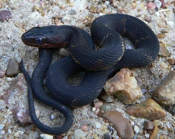 К чему снится укус змеи по соннику? видеть во сне укус змеи – толкование снов.