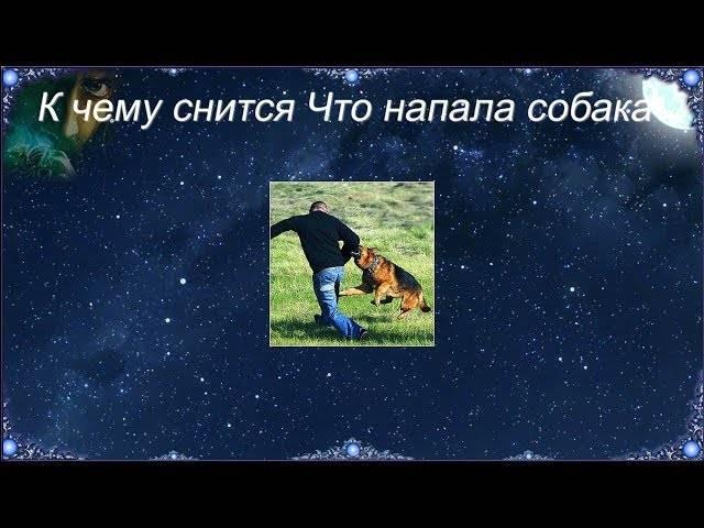 Нападающие собаки