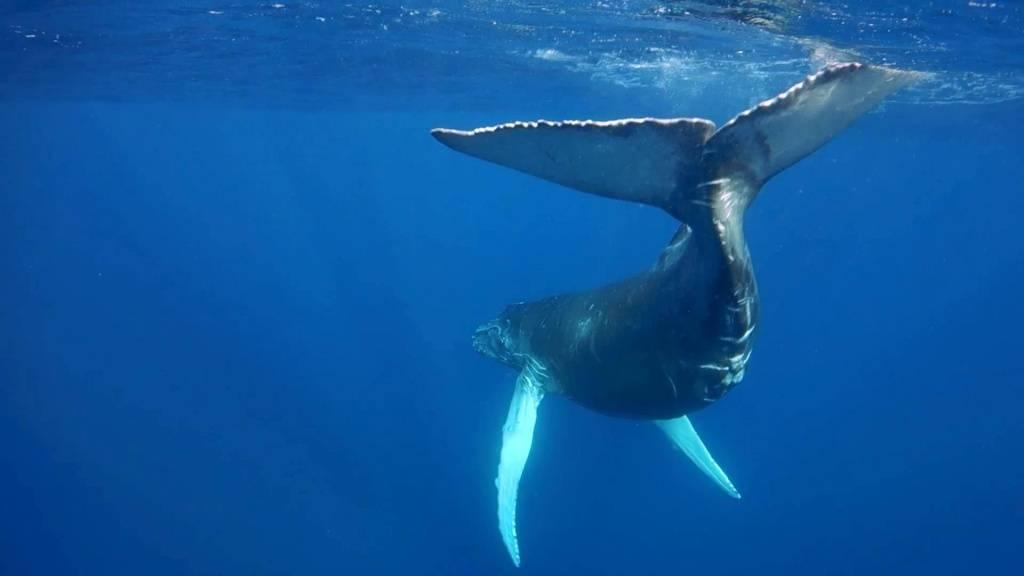 К чему снится кит: толкования по различным сонникам