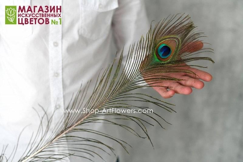 8 значений татуировок с павлиньими перьями
