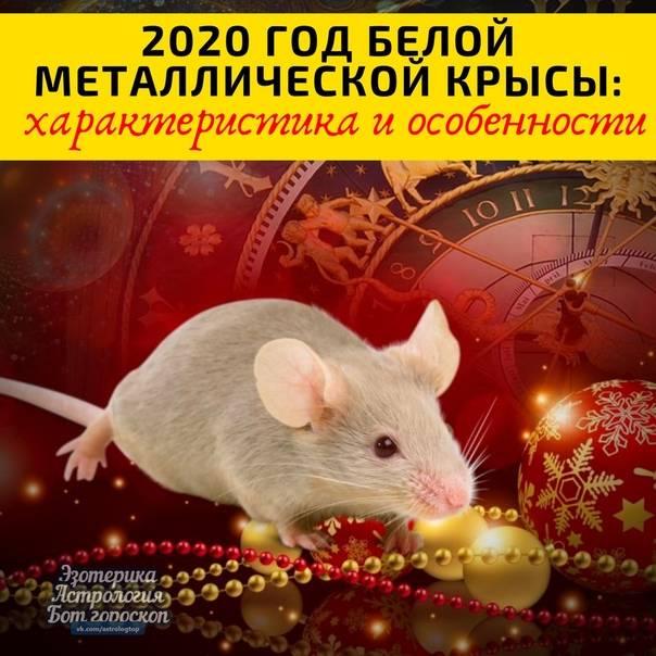 Женщина крыса (20 фото): характеристика женщин, рожденных в год крысы по восточному гороскопу, совместимость с мужчиной козой, особенности знаков зодиака огненная и деревянная крысы