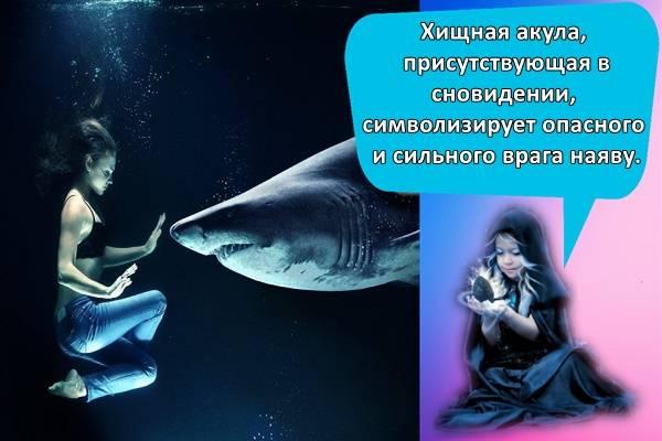 К чему снится акула женщине, девушке, мужчине