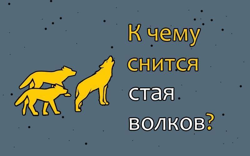 Сонник стая собак нападает. к чему снится стая собак нападает видеть во сне - сонник дома солнца