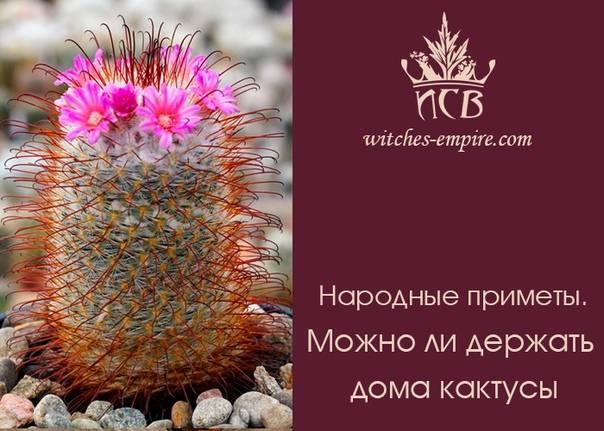 Толкование приметы, можно ли держать в доме кактус
