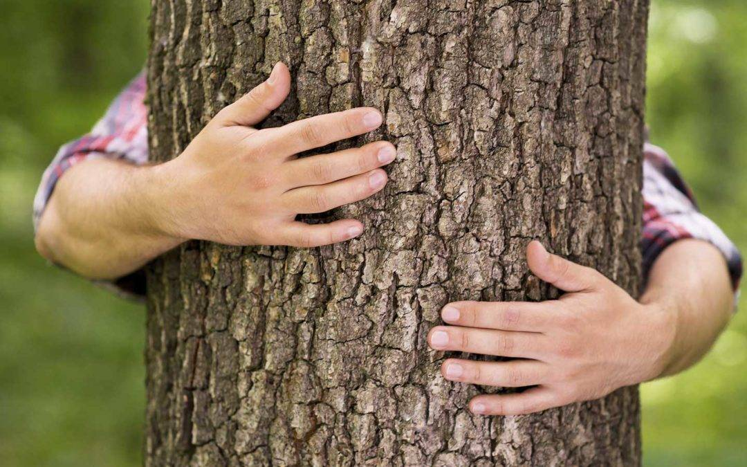Лесные деревья доноры и вампиры: польза прогулок в лесу