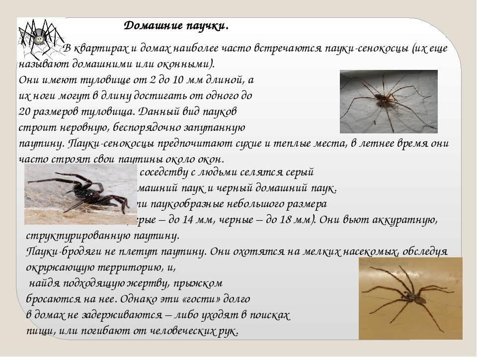 Почему нельзя убивать пауков в доме и квартире: 7 примет и бытовой смысл