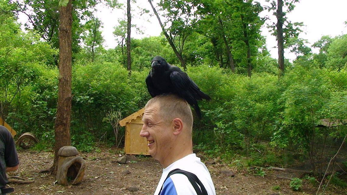 Народная примета, если птица накакала на голову