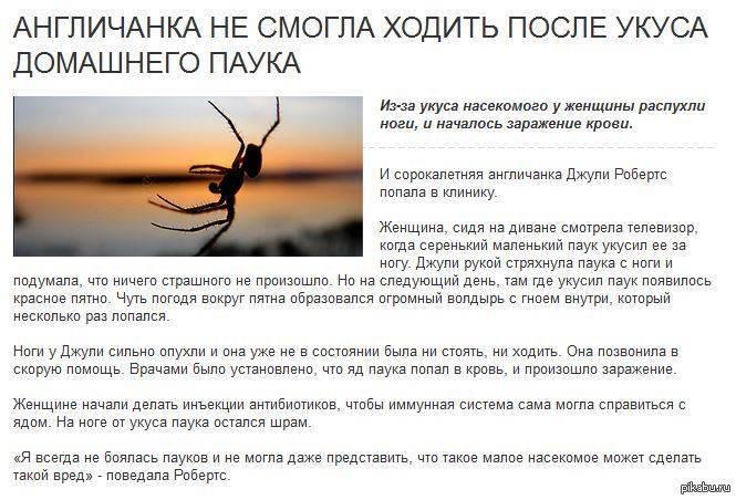 Сонник спящий паук. к чему снится спящий паук видеть во сне - сонник дома солнца