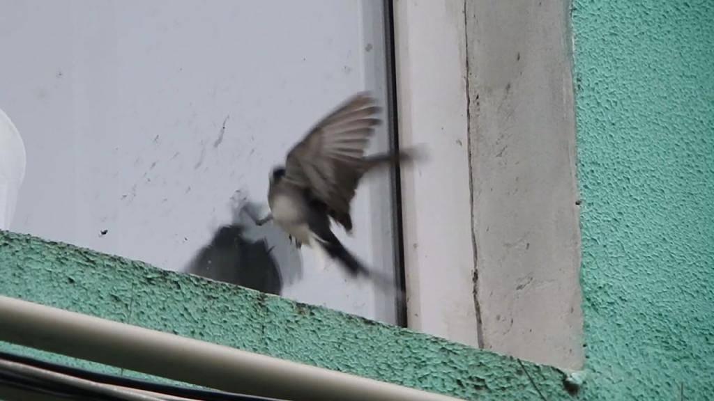 Что означает примета «голубь залетел в окно»