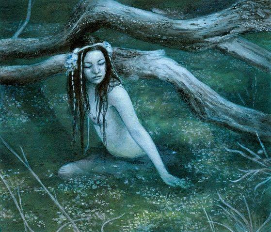 Плавающий водяной орех чилим. что за растение, где выращивается, как собирается и применяется?