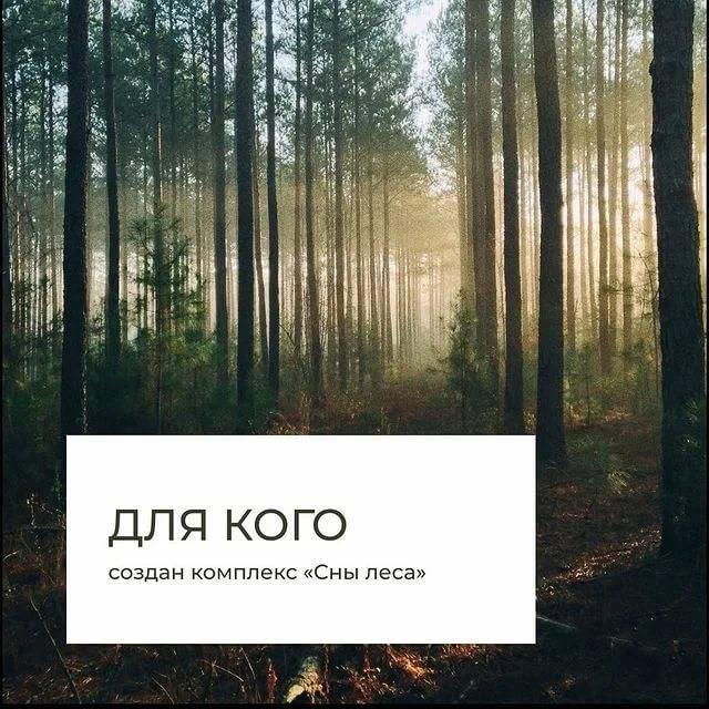 Сонник лес. к чему снится, что означает сон, в котором приснилось лес — мир космоса