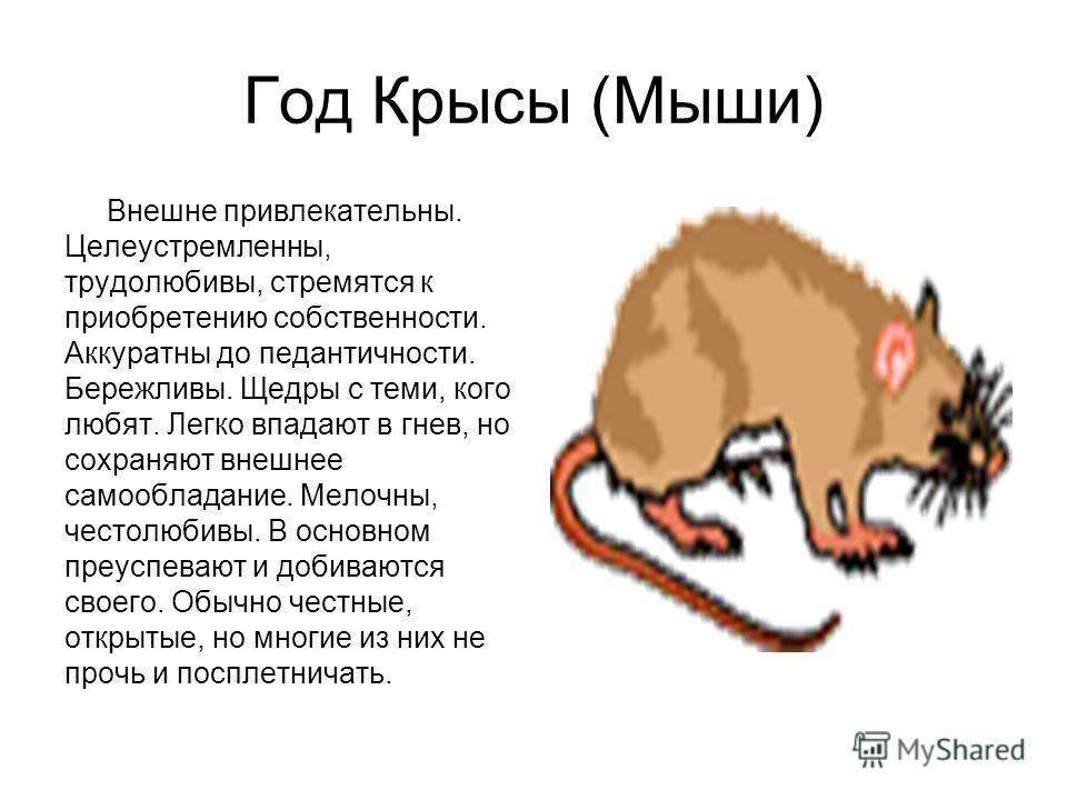 Мужчина-крыса - женщина-крыса совместимость