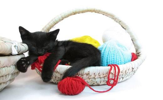 Сонник котенок  приснился, к чему снится котенок во сне видеть?