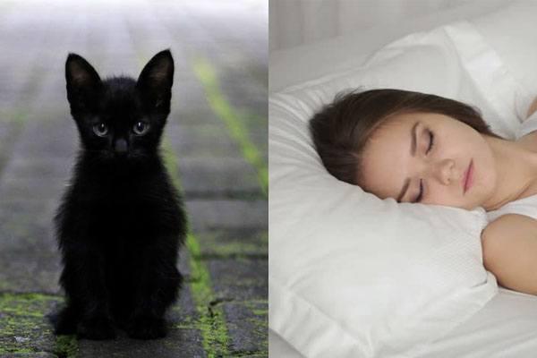 Сонник черные коты. к чему снится черные коты видеть во сне - сонник дома солнца