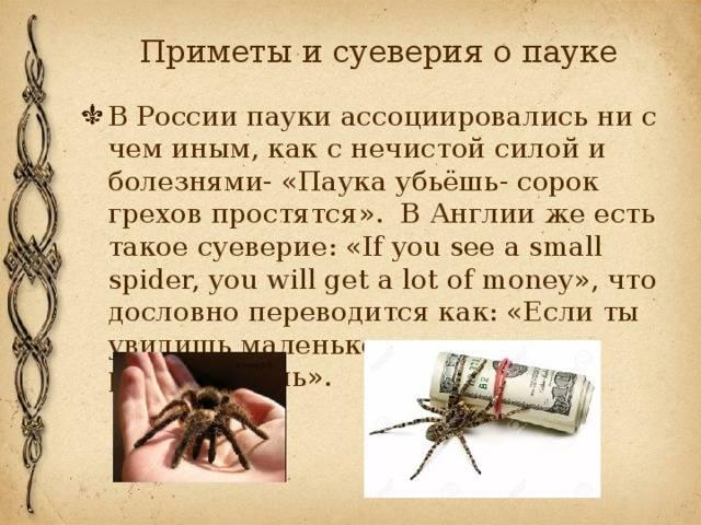 Паук - приметы: в доме, в ванной, в квартире, к чему увидеть на потолке белого или черного паука