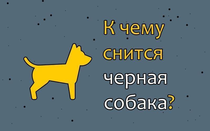 К чему снится большая собака: белая, чёрная, пятнистая, бешеная? основные толкования - к чему снится большая собака - автор екатерина данилова - журнал женское мнение