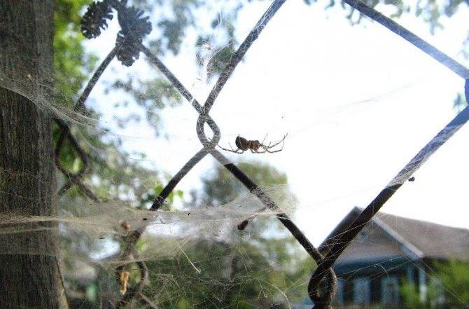 Можно ли убивать пауков в квартире