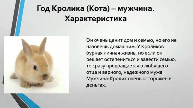 Рыбы-кот (кролик) характеристика знака