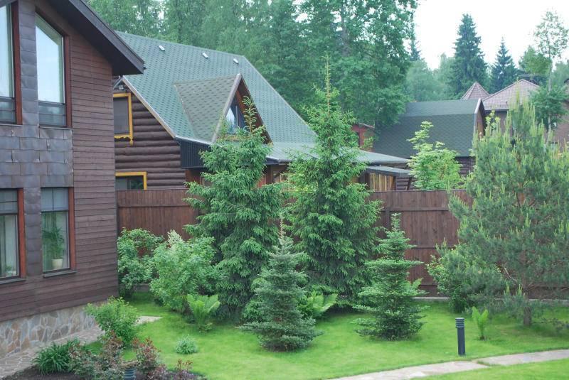 Можно ли спилить ель возле дома приметы. почему нельзя сажать елки на участке – приметы и суеверия