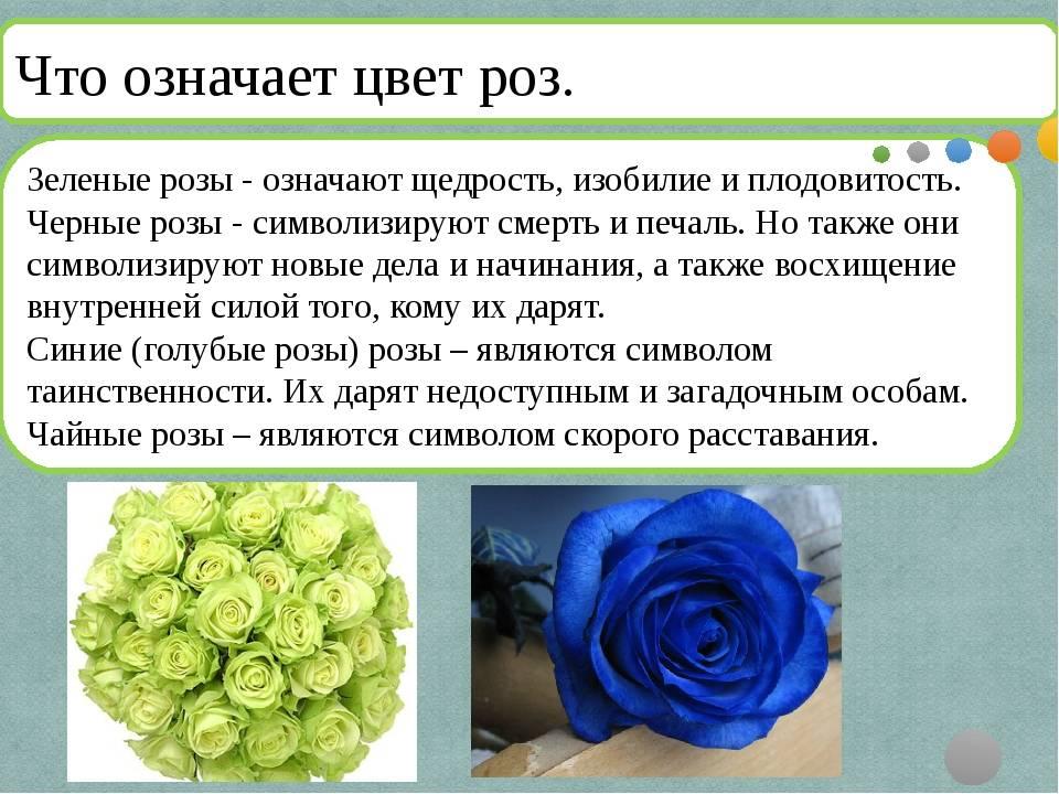 Сколько дарить роз девушке? королева цветов желанна в любом количестве :: syl.ru