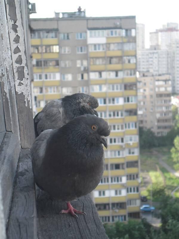 Если птица свила гнездо под крышей дома. приметы про птиц – опыт поколений