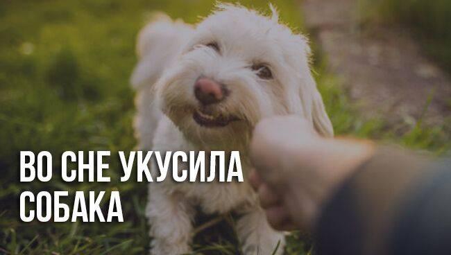 Сонник укус собаки за голову. к чему снится укус собаки за голову видеть во сне - сонник дома солнца