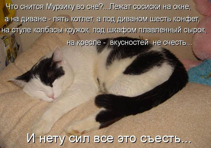 Сонник чёрный кот. к чему снится чёрный кот видеть во сне - сонник дома солнца