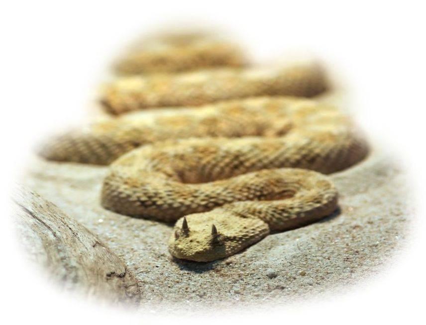 Сонник увернуться от укуса змеи. к чему снится увернуться от укуса змеи видеть во сне - сонник дома солнца