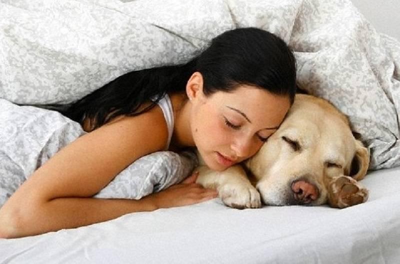 Сонник укусила собака. к чему снится укусила собака видеть во сне - сонник дома солнца