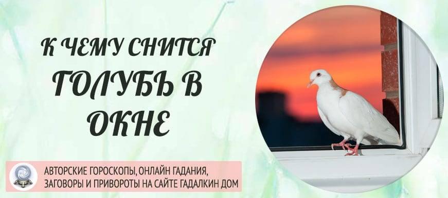 Сонник голубь белый сел на голову. к чему снится голубь белый сел на голову видеть во сне - сонник дома солнца