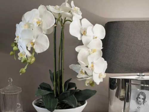Орхидея — цветок для женщин