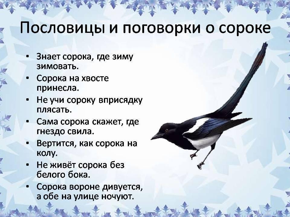 Приметы, если найти мертвую птицу
