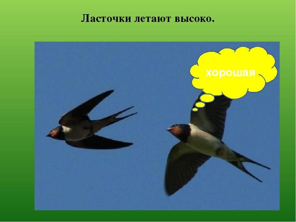 Приметы о ласточках: что значит, если птицы залетели в дом и стоит ли этого бояться?
